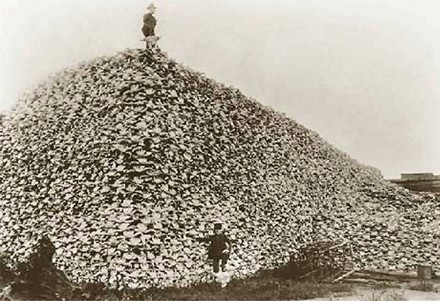 Le-bison-americain.jpg