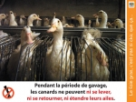 foie,gras,canard,gavage,interdiction